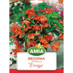 Bulbi Begonia Pendula Orange calibru 5/6 2 bucati AMIA