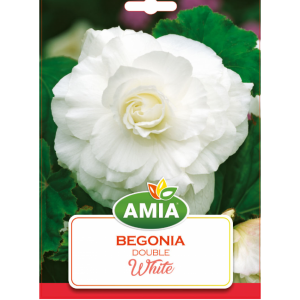Bulbi Begonia Double White calibru 5/6 2 bucati AMIA